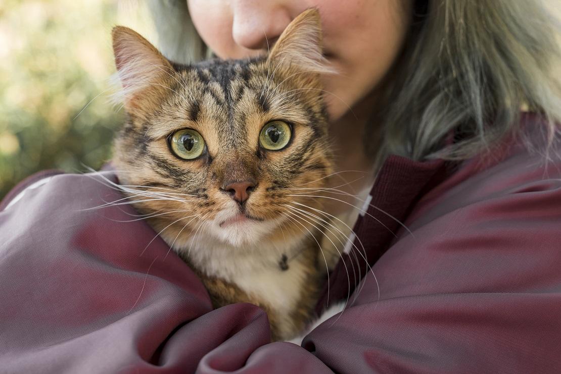 dia del gato Farmacias Dr. Ahorro